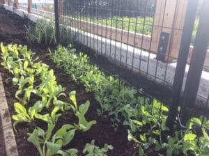 Filberg Cutting Garden Progress