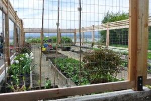 Liz Stubbs Cutting Garden revitalization