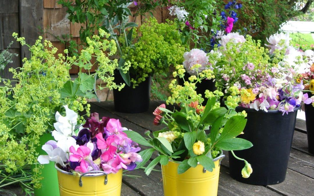 Liz Stubbs Cutting Garden