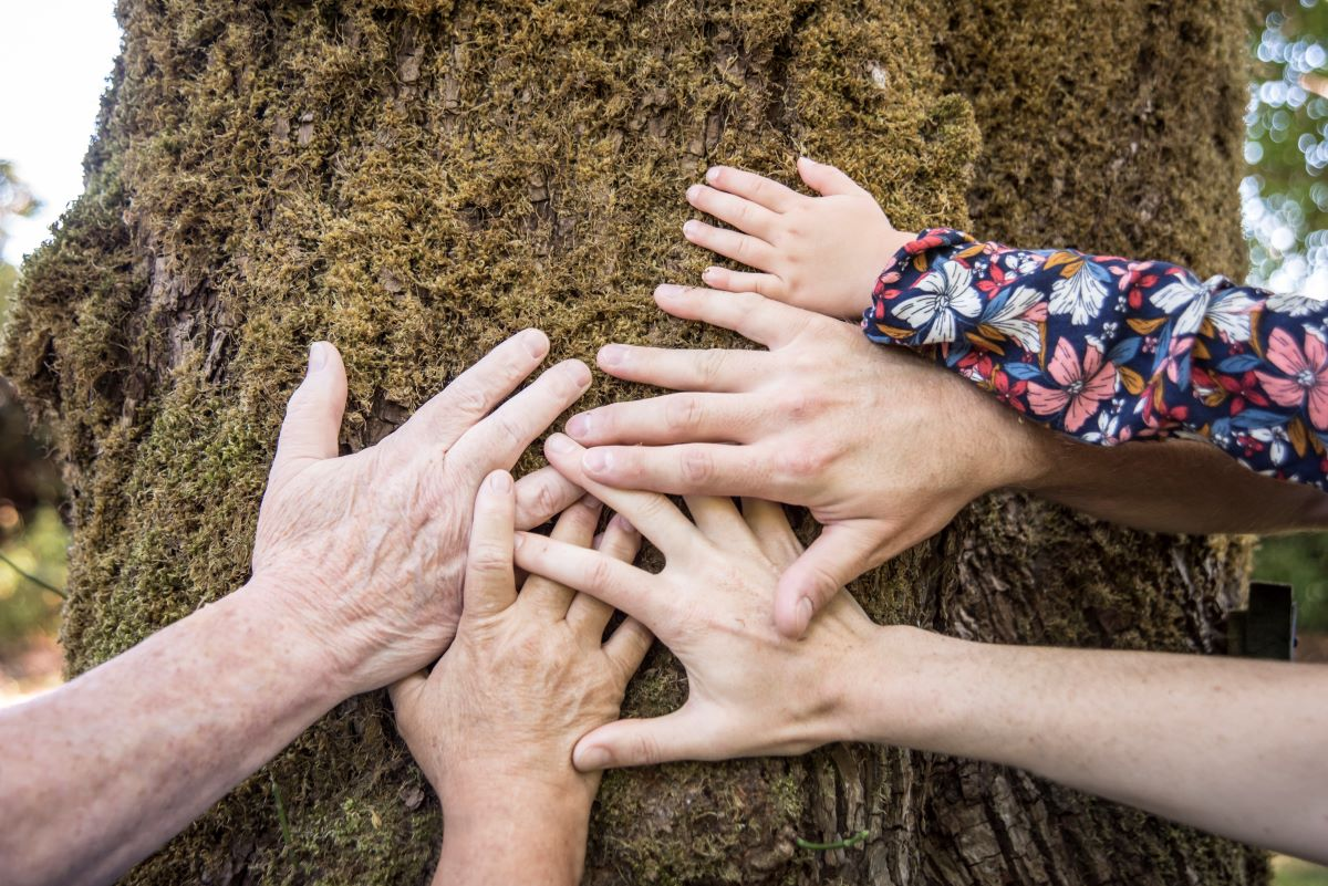 multi generational hands on a trees bark